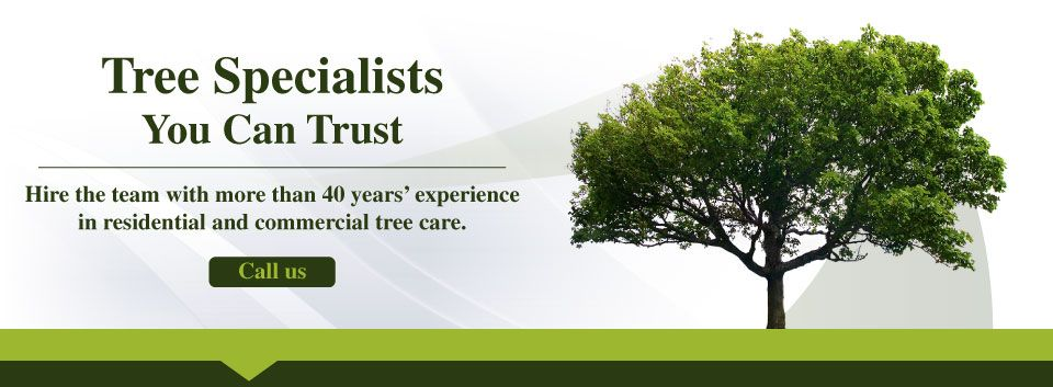 Tree Specialists You Can Trust | Call Us